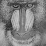 baboon50noise_restored.jpg